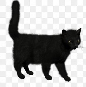 Black Cat - Siamese Cat Bombay Cat Tournxe9e Du Chat Noir Kitten Felidae PNG
