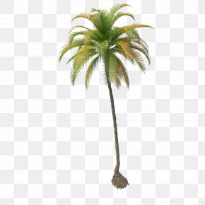 Coconut Tree File - Coconut Tree PNG