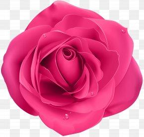 Rose Pink Transparent Clip Art - Rose Clip Art PNG