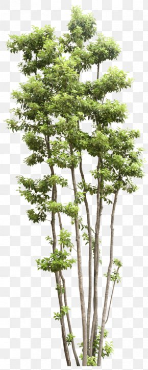 Trees - Tree Shrub Transparency And Translucency PNG