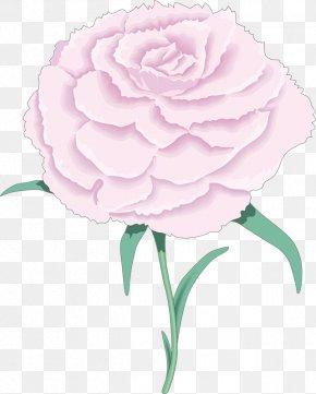 January 26 - Garden Roses Carnation Flower Clip Art PNG