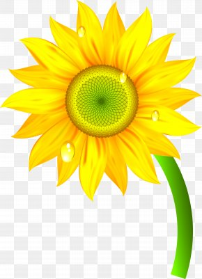 Sunflower - Nature Clip Art PNG