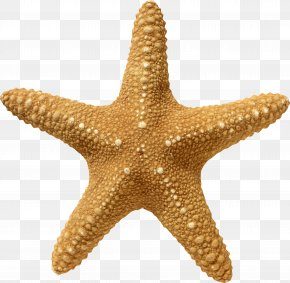 Starfish - Starfish Wallpaper PNG