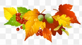Autumn Leaves And Acorns Decor Picture - Autumn Leaf Color Clip Art PNG