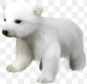 Polar White Bear - Polar Bear Kodiak Bear Giant Panda Pizzly PNG