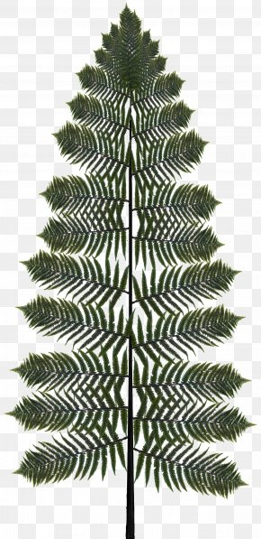 Palm Tree Elaeis - Cartoon Palm Tree PNG