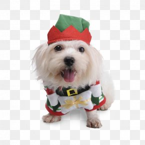 2018 Adorable Dogs - Maltese Dog Puppy Pet Shih Tzu Bichon Frise PNG