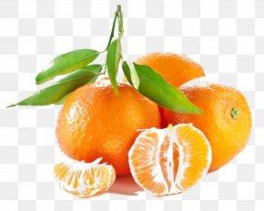 Orange - Mandarin Orange Tangerine Fruit Seed PNG