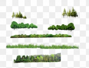 Forest - Tree Forest Computer File PNG