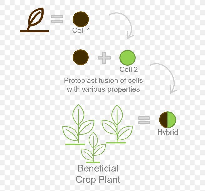 Leaf Logo Brand Font, PNG, 663x763px, Leaf, Brand, Diagram, Flora, Grass Download Free