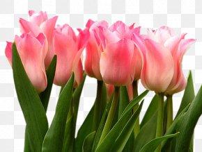 Pink Tulips - Tulip Flower Leaf Clip Art PNG