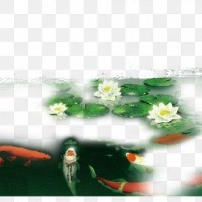 Lotus - Petal Flora Leaf Wallpaper PNG