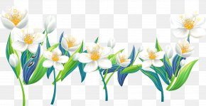 Lily Pictures - Flower Clip Art PNG