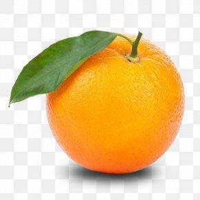 Orange Clipart - Orange Tangerine Clip Art PNG