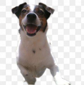 Blossom Blast 150 - Dog Breed Jack Russell Terrier Parson Russell Terrier American Staffordshire Terrier Staffordshire Bull Terrier PNG