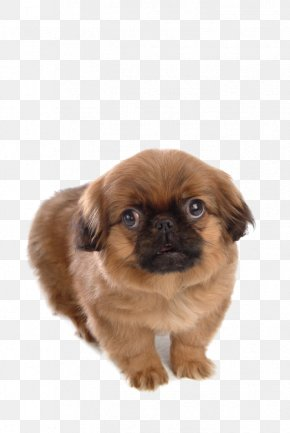 Dog,puppy,pet,animal - Dog Puppy Cat Pet PNG