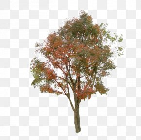 Tree - Tree Information Clip Art PNG