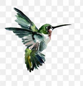 Hummingbird - Hummingbird Watercolor Painting Drawing PNG