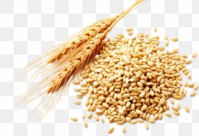 Wheat - Wheat Berry Food Bran PNG