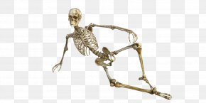 Skeleton Frame Model - Bone Human Skeleton Osteoporosis Human Body PNG