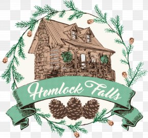 Holly Pine Family - Holly PNG