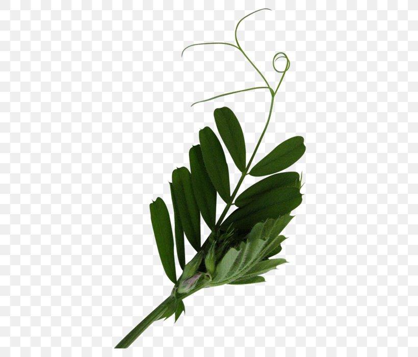 Leaf Tree Plant Stem, PNG, 700x700px, Leaf, Blog, Book, Branch, Flower Download Free