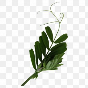 树叶 - Leaf Tree Plant Stem PNG