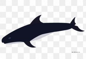 Whale - Porpoise Rough-toothed Dolphin Common Bottlenose Dolphin Killer Whale Clip Art PNG