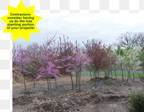 Tree Shade - Tree Planting Landscaping Landscape Flower PNG