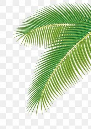 Palm Leaf - Arecaceae Leaf Euclidean Vector Clip Art PNG