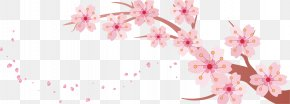 Cherry Branch - Cherry Blossom Banner Template PNG