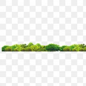 Forest - Gratis Download Resource PNG