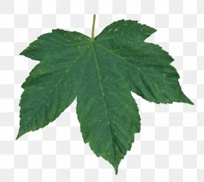 Green Leaf - Image Resolution Leaf Display Resolution PNG