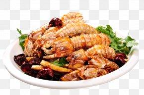 Mantis Shrimp - Mantis Shrimp Malacostraca Seafood Bathysquilloidea PNG