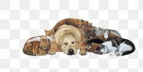 Pet Dogs - Golden Retriever Shih Tzu Cat Puppy Pet PNG