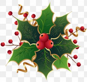 Christmas Holly Mistletoe Clip Art Image - Christmas Eve At Friday Harbor Common Holly Mark Nagle The Ivy Green PNG
