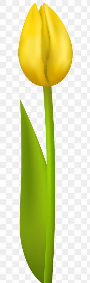 Yellow Tulip Transparent Clip Art Image - Yellow Tulip Design Petal PNG