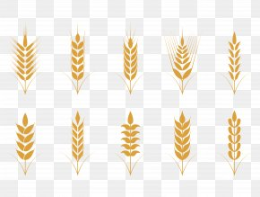 Vector Simple Flat Golden Wheat Pattern - Oat Cereal Wheat Icon PNG