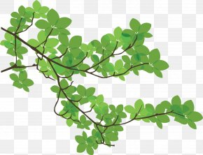 Branches - Branch Leaf Tree PNG