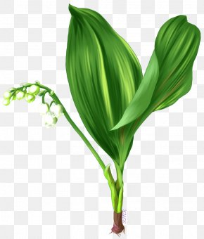 A Gentle Bargain To Send Gifts - Leaf Grasses Plant Stem Flower Family PNG