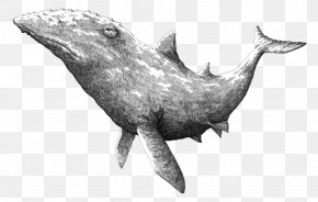 Black And White Sketch Whale Illustrator - Black And White Drawing Illustration PNG