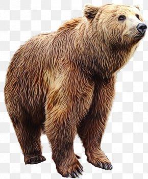 Wildlife Kodiak Bear - Teddy Bear Cartoon PNG