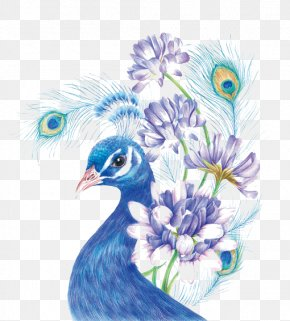Blue Peacock - Drawing Colored Pencil Painting Sketch PNG