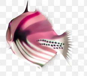 Fish - Fish Image Download Animal PNG