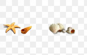 Shell - Seashell Download Icon PNG