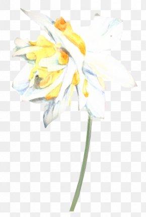 Iris Wildflower - Floral Spring Flowers PNG