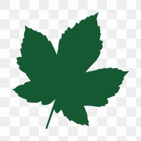Leaf - Maple Leaf Acer Campestre Tree Heart Of England Forest PNG