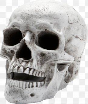Skull Image - Skull Skeleton PNG