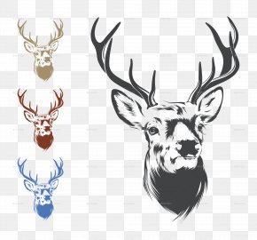Deer Head Image - Deer Drawing Clip Art PNG