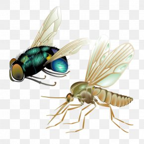 Cartoon Insects - Mosquito Insect Fly Vector PNG